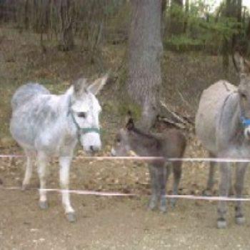 Gite de La Grange - Les ânes - Gite de France